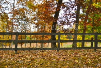Autumn Fenceline