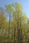 Back Roads Woods2