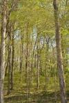 Back Roads Woods3
