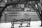Bench and Bird