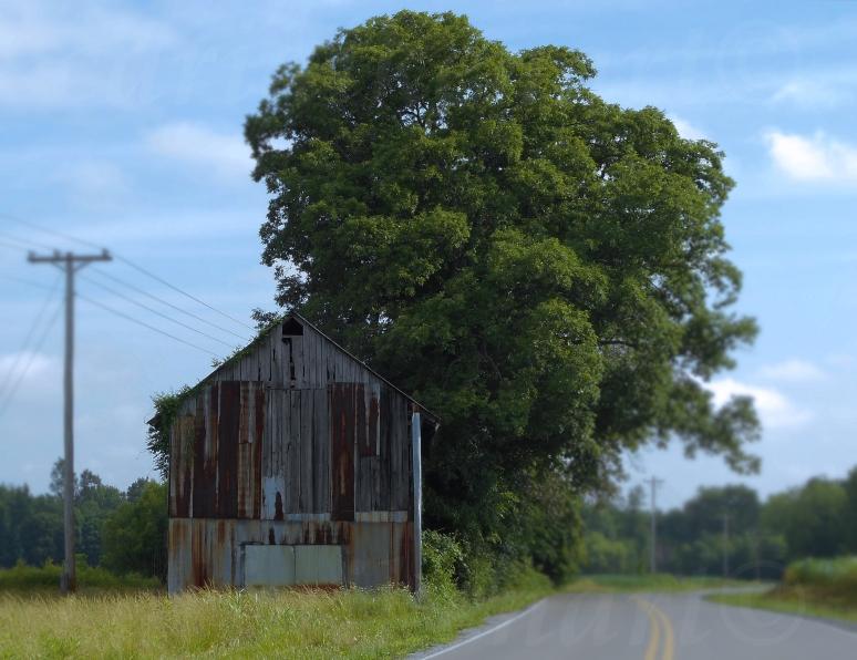Old Barn 11