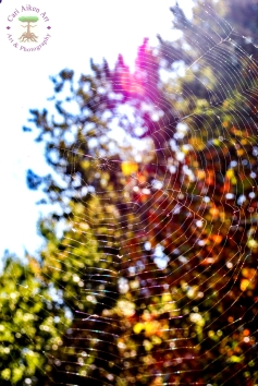 The Web We Weave