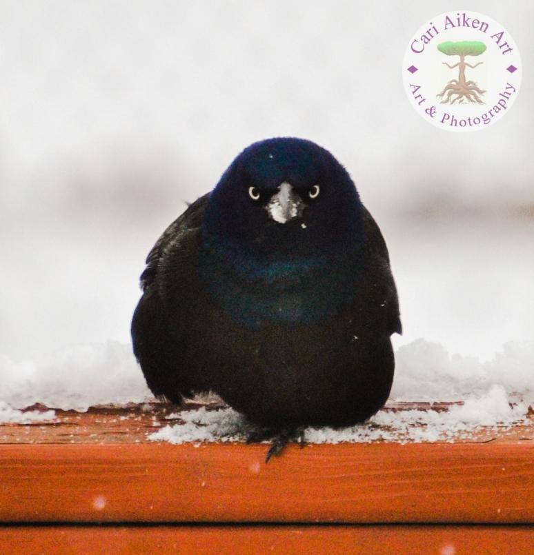Bird Profile Pic WM