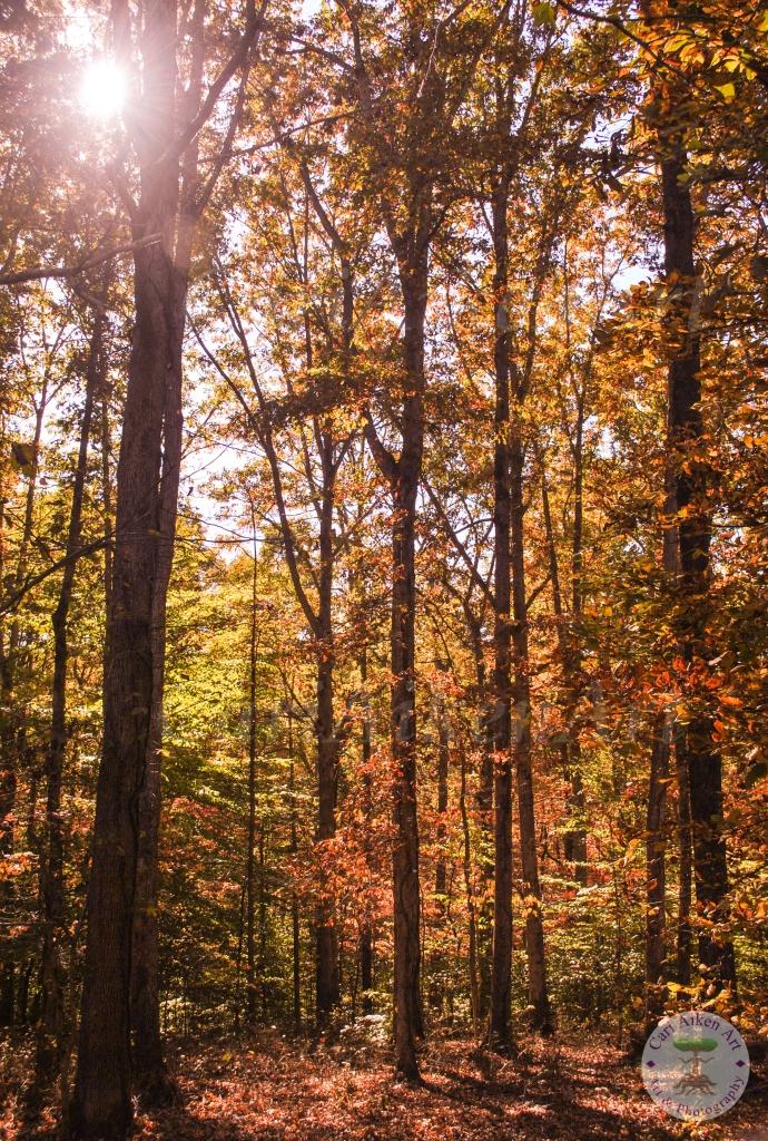 Montgomery Bell Autumn 2 WM