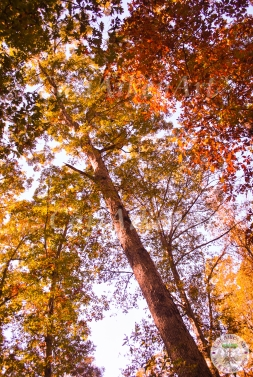Upward Fall WM