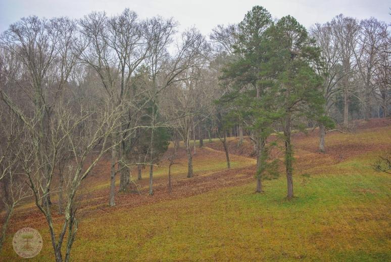 Winter Meadow WM
