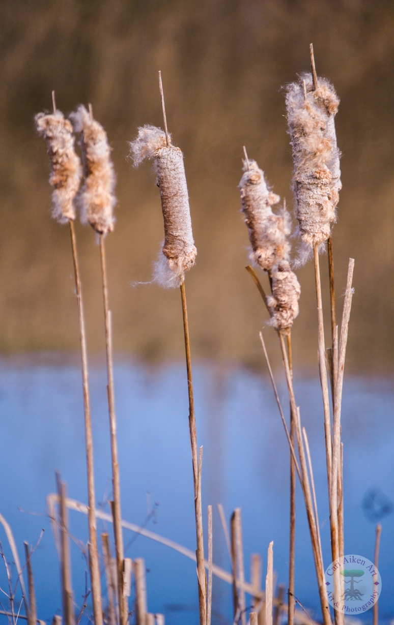Fluffy Cat Tails WM