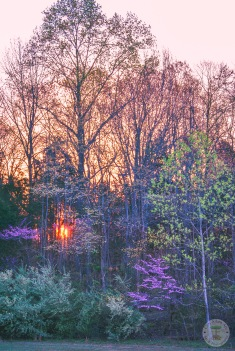 Sunrise Through the Trees 2 WM